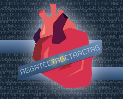 Mutations in the gene APOC3 lower triglyceride levels in the blood and also significantly reduce a person's risk of coronary heart disease. [Susanna Hamilton
