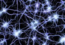 Loss of Calcium in Neurons Linked to Hallmark of Alzheimer's Disease