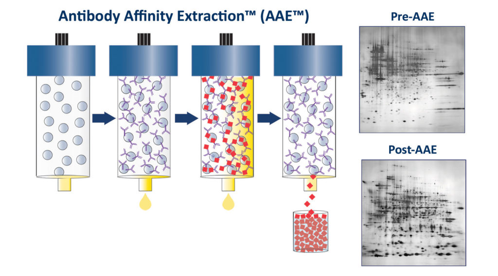 Antibody Affinity Extraction (AAE™)