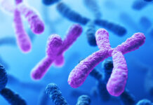 First Complete Autosome Sequenced: Chromosome 8 Assembly Fills in Gaps, Offers Evolutionary Clues